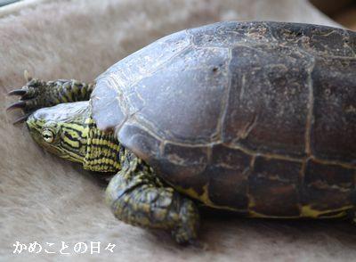 DSC_0965-suke.jpg