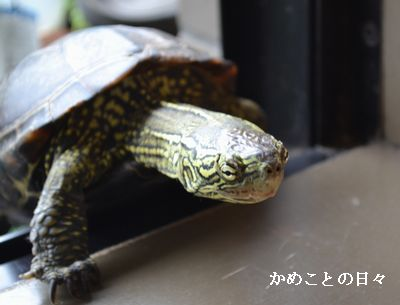 DSC_0967-suke.jpg