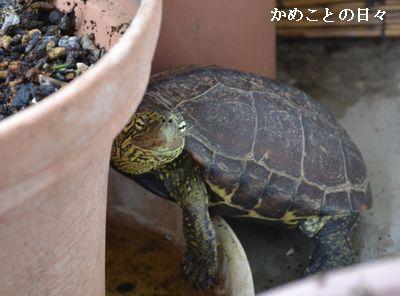 DSC_0967-suke_20140717212849ed6.jpg