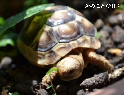 DSC_0975-ta.jpg