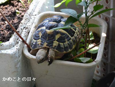 DSC_0992-fu.jpg