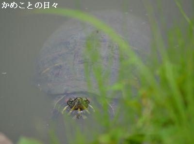 DSC_1004-kame.jpg