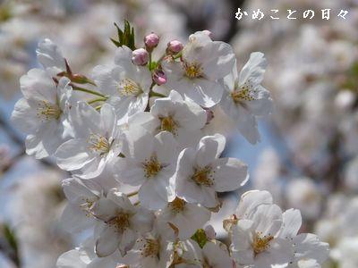 P1110282-saku.jpg