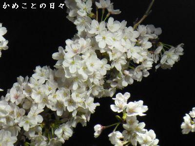 P1110287-saku.jpg