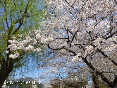 P1110299-saku.jpg