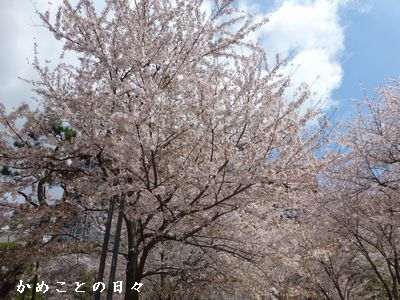 P1110333-saku.jpg