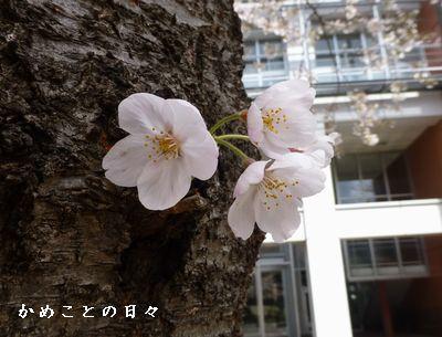 P1110341-saku.jpg