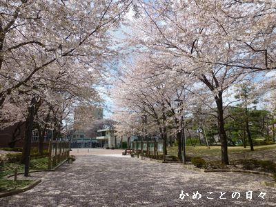 P1110346-saku.jpg