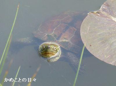 P1110385-kusa1.jpg