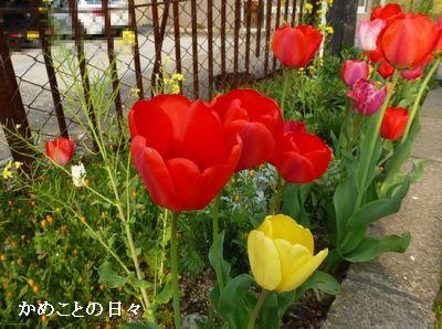 P1110450-hana.jpg