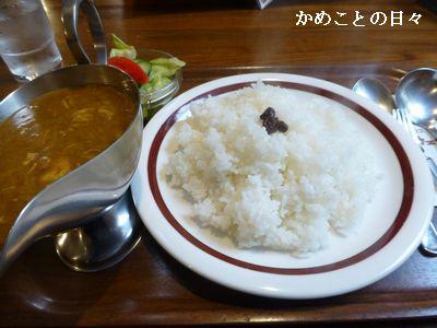 P1110581-curry.jpg