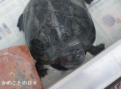 P1110740-kuro.jpg