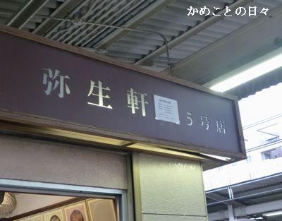P1110933-yayoi.jpg