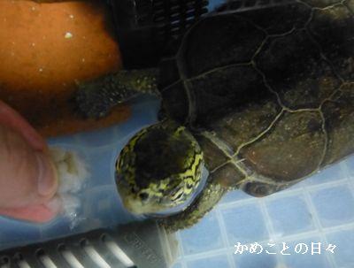 P1110941-suke_201405210031301f6.jpg