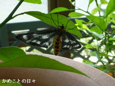 P1120156-ga.jpg