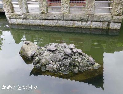 P1120482-kame.jpg