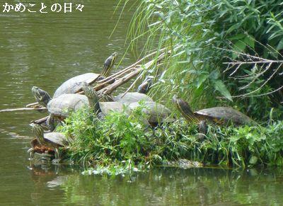 P1120578-kame.jpg