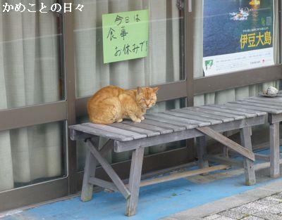 P1120780-cat.jpg