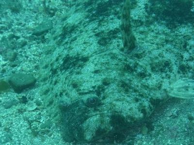 02-25 ヒラメ
