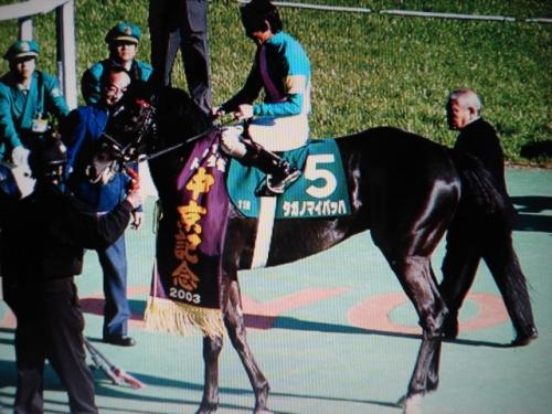 【競馬】「タガノ」の馬はなぜ追い込み馬ばかりなのか?