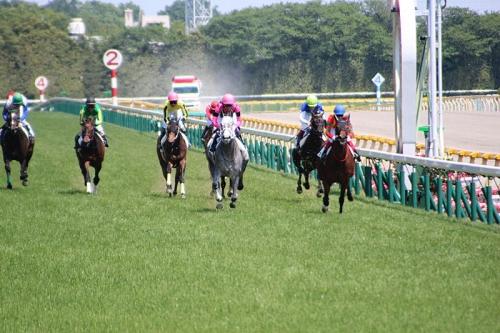 【競馬】スマートレイアー(ノースフライト2世)