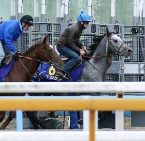 【競馬】ゲートに入らない馬をムチでぶっ叩くJRA職員