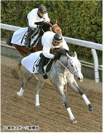 【阪神牝馬】STAP馬券のボックスで勝負じゃ!