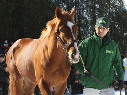 【競馬】オルフェ・カナロア種牡馬生活スタート、ビワハイジやトゥザヴィクトリーに種付け・受胎確認