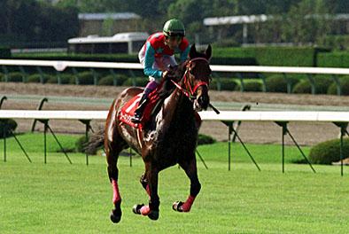 【競馬】1番好きな短距離馬