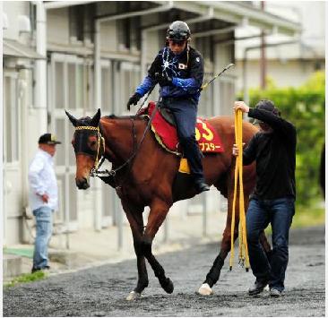 【予想の】2014年第75回優駿牝馬(オークス)part6【ご参考に】