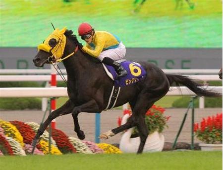 【速報】菊花賞馬ビッグウィークさん引退