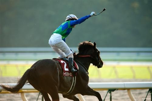 【トーセンジョーダン】はなぜ引退→種牡馬入りしないのか
