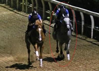 【競馬】喧嘩が強そうな馬