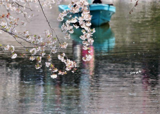 桜まつり6