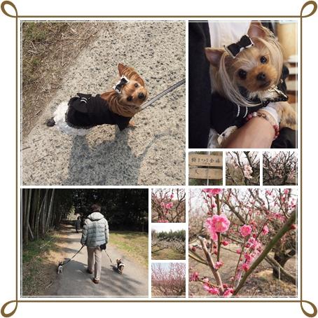 cats_2014032412154237a.jpg