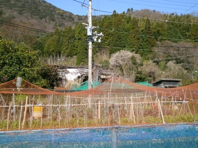 白杉補助建設物 (3)