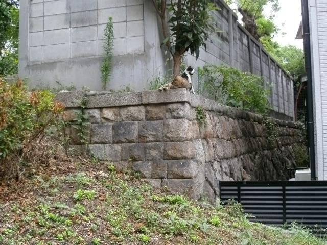 真田山公園 騎4 (9)