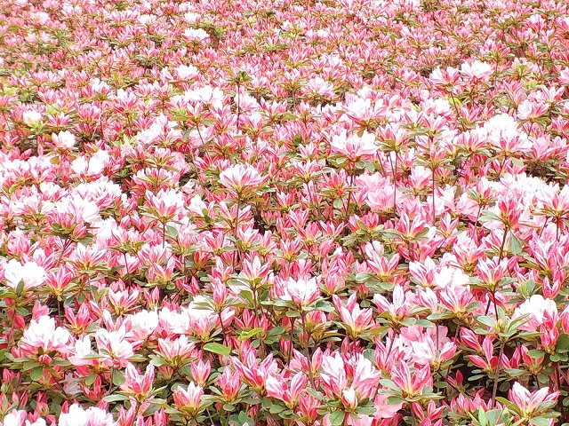 BotanicalGardenFukuokaCity