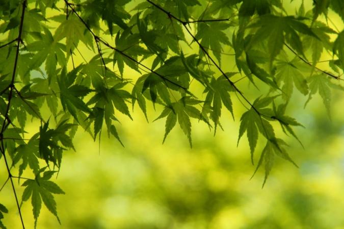 DSC04959昭和記念公園