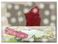 ペン画/オリジナル:「バラの花と儚げな美青年」
