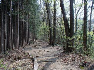 140425-124606-4.25丹三郎~御岳山 018_R