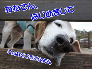 20140419_1.png