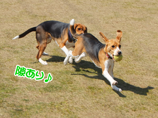 20140419_17.png