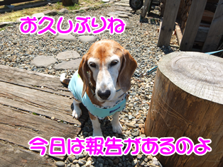 20140419_2.png