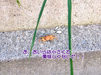 20140730_4.png