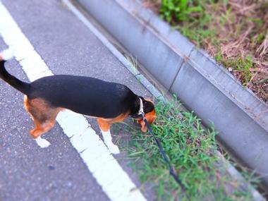 20140822_1.jpg