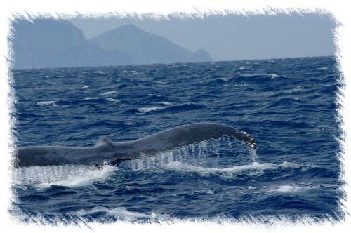 0317クジラ