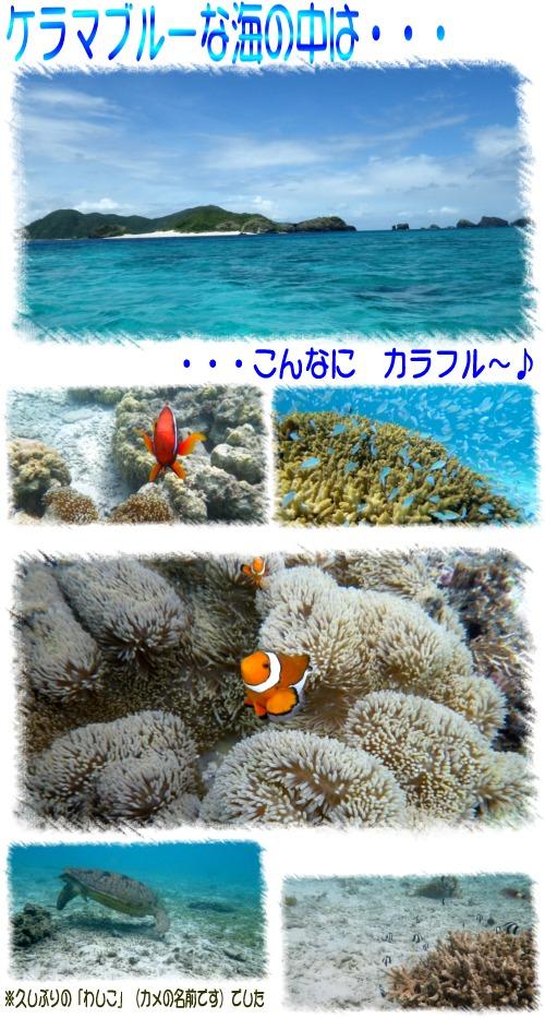 海の中は・・・
