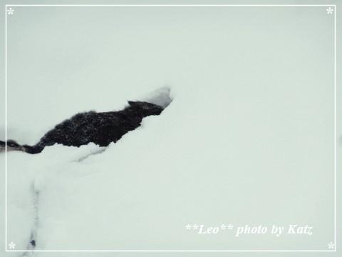 20140119 Leo (6)