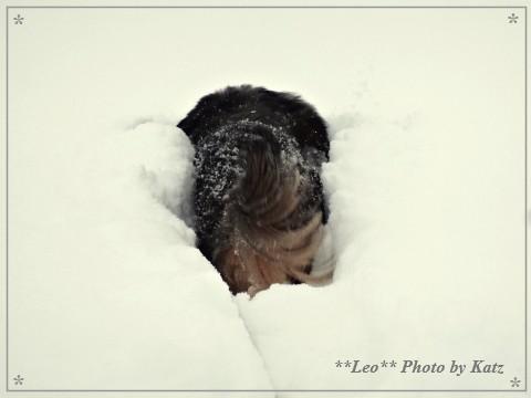 20140119 Leo (8)